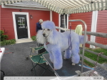 Misc Pictures - Aprils Doggie Spa